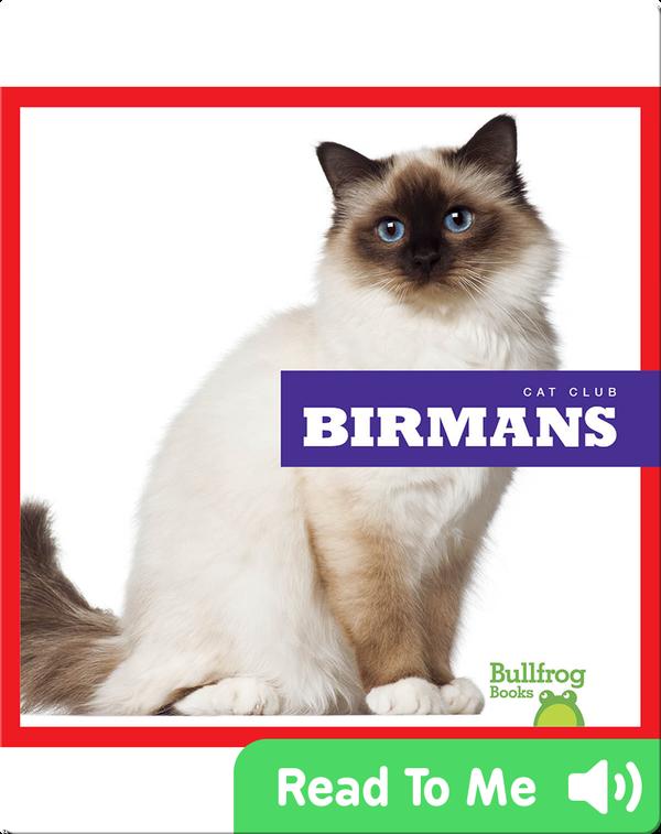 Cat Club: Birmans