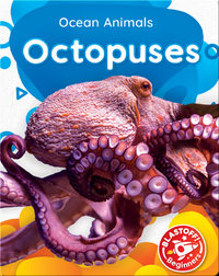 Ocean Animals: Octopuses