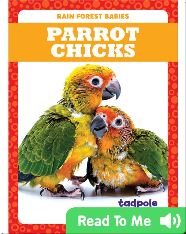 Rain Forest Babies: Parrot Chicks