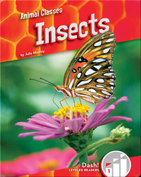 Animal Classes: Insects