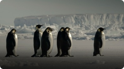 The Wonder of Animals: How Does a Penguin Launch Itself From the Sea?