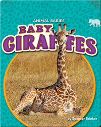 Animal Babies: Baby Giraffes