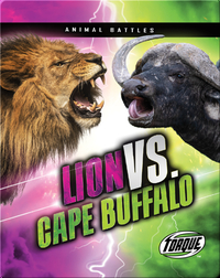 Animal Battles: Lion vs. Cape Buffalo