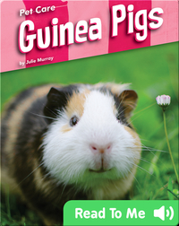 Pet Care: Guinea Pigs