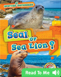 Spotting Differences: Seal or Sea Lion?