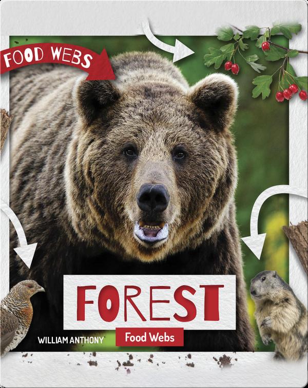 Forest Food Webs