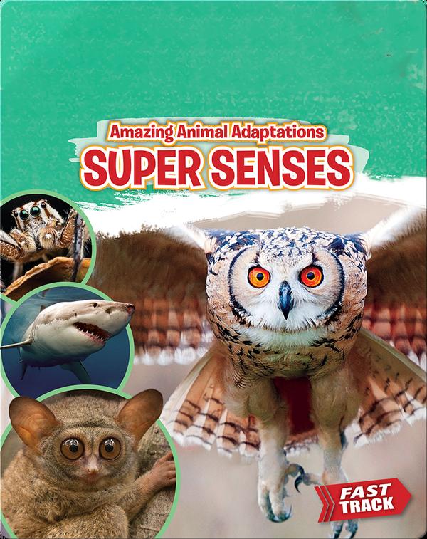 Amazing Animal Adaptations: Super Senses