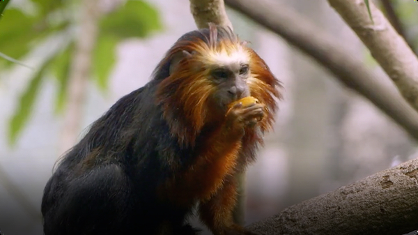 Meet Zoey and Cilantro, Two of the Cutest Tamarin Monkeys