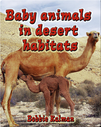 Baby Animals in Desert Habitats