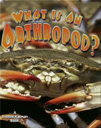 What is an Arthropod?