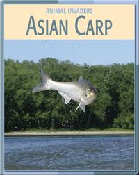 Animal Invaders: Asian Carp