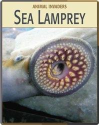 Animal Invaders: Sea Lamprey