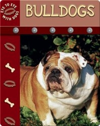 Eye To Eye With Dogs: Bulldogs