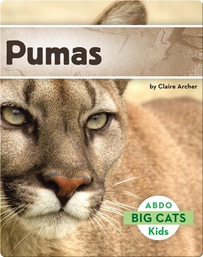 Big Cats: Pumas