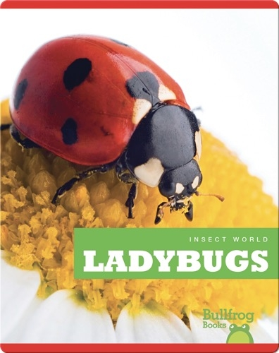 Insect World: Ladybugs