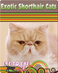Eye To Eye With Cats: Exotic Shorthair Cats