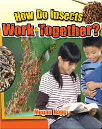 How Do Insects Work Together?