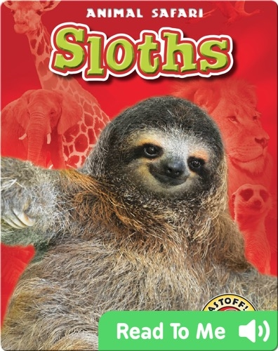 Sloths: Animal Safari