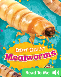 Creepy Crawlies: Mealworms