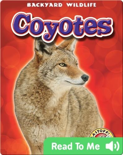 Coyotes: Backyard Wildlife