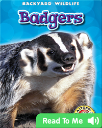 Badgers: Backyard Wildlife