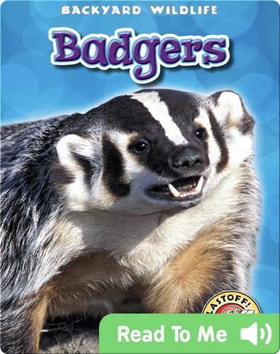 Badgers: Backyard Wildlife
