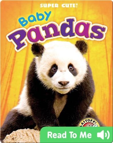 Super Cute! Baby Pandas