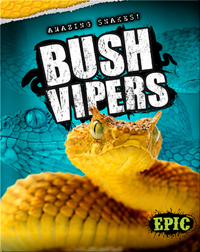 Amazing Snakes! Bush Vipers