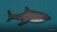Shark Hearing