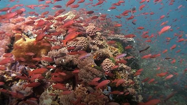 Jonathan Bird's Blue World: Coral Reefs