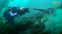 Torpedo ray attacks diver's camera