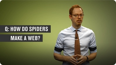 How Do Spiders Make a Web?