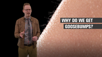 Why Do We Get Goosebumps?