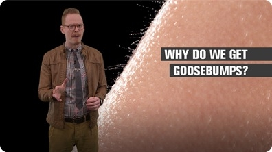 Why Do We Get Goosebumps?