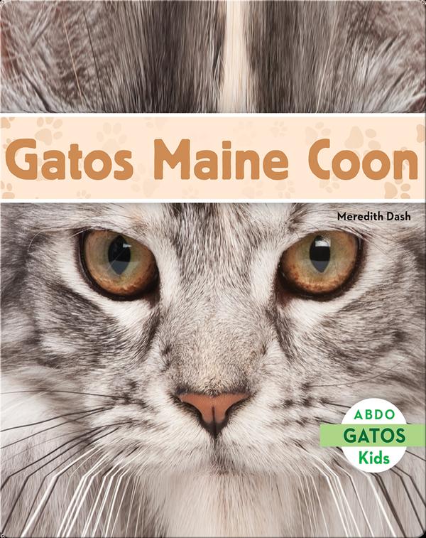 Gatos Maine Coon