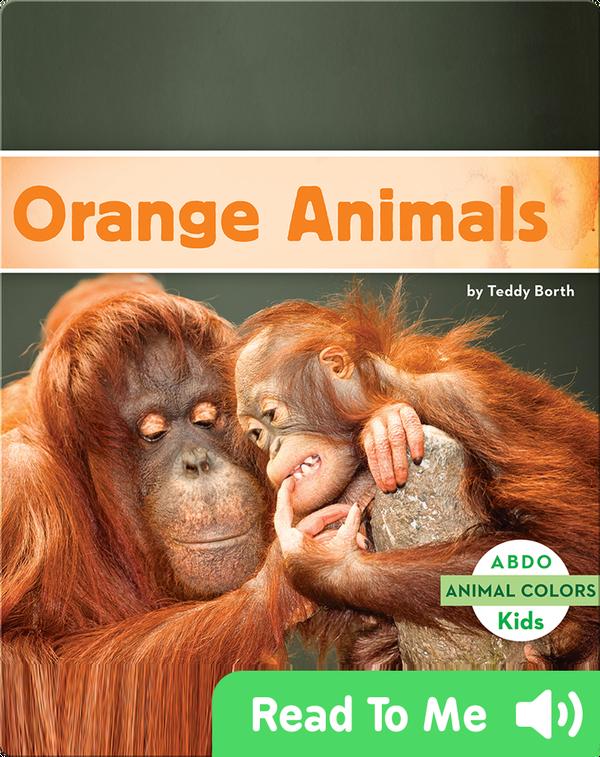 Orange Animals