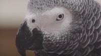 Biology: The Minds of Birds