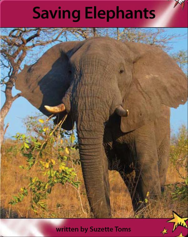 Saving Elephants