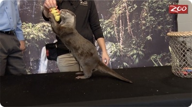 Otter Behavior Training