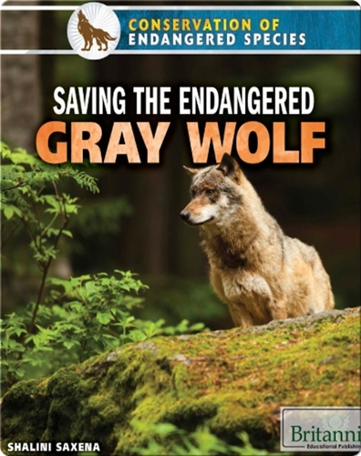 Saving the Endangered Gray Wolf