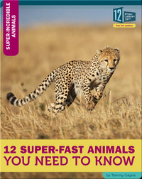 12 Super-Fast Animals You Need To Know