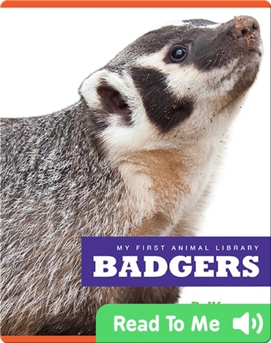 My First Animal Library: Badgers