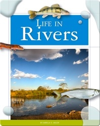 Life in Rivers