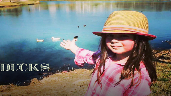 Ducks for Kids | All about Ducks | Fun Duck Videos for Kids
