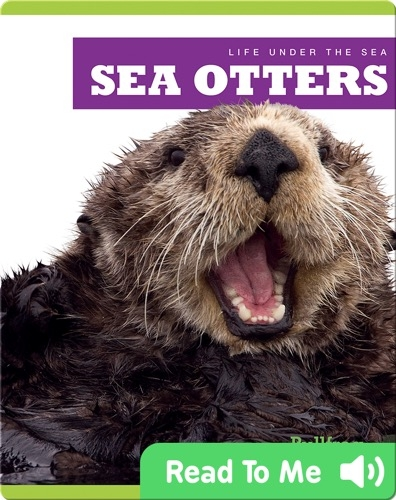 Life Under The Sea: Sea Otters