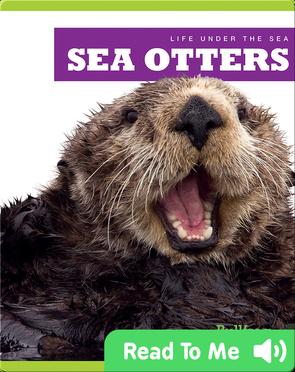 Life Under The Sea: Sea Otters