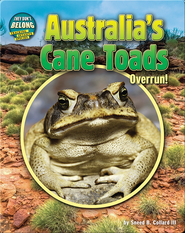 Australia's Cane Toads: Overrun!