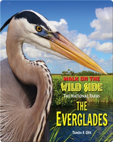 Walk on the Wild Side: The Everglades