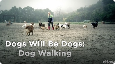 Dog Walking | Dogs Will Be Dogs