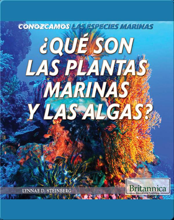 ¿Qué son las plantas marinas y las algas?